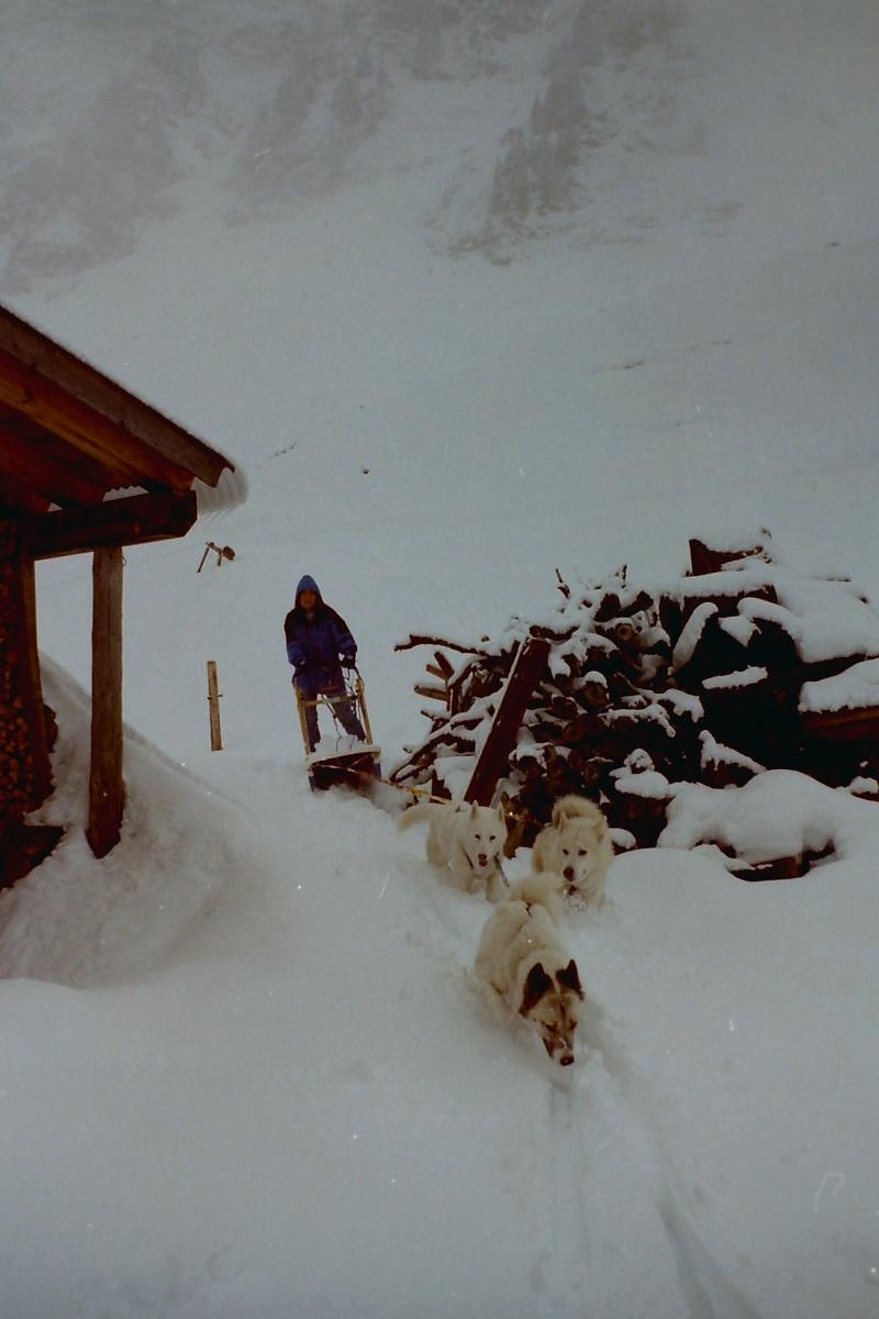 Mes plus beaux souvenirs de traineau à Chiens Pict0112