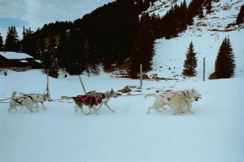 Mes plus beaux souvenirs de traineau à Chiens Pict0114