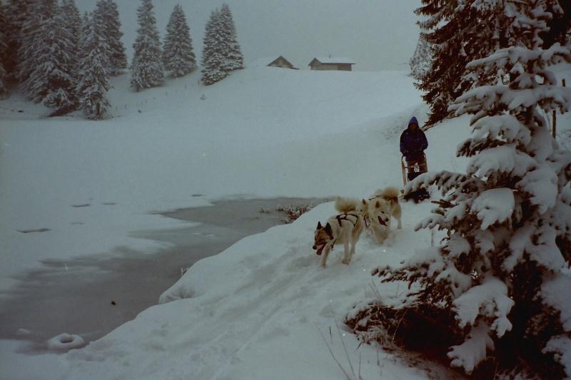 Mes plus beaux souvenirs de traineau à Chiens Pict0115