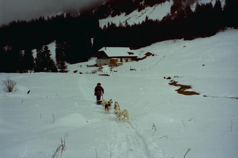 Mes plus beaux souvenirs de traineau à Chiens Pict0118