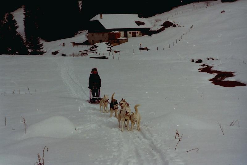 Mes plus beaux souvenirs de traineau à Chiens Pict0119