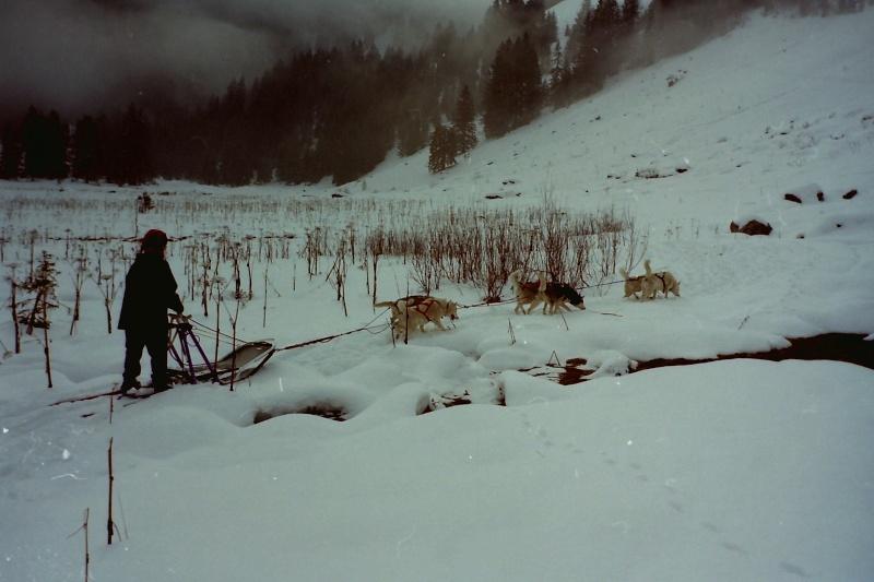 Mes plus beaux souvenirs de traineau à Chiens Pict0121