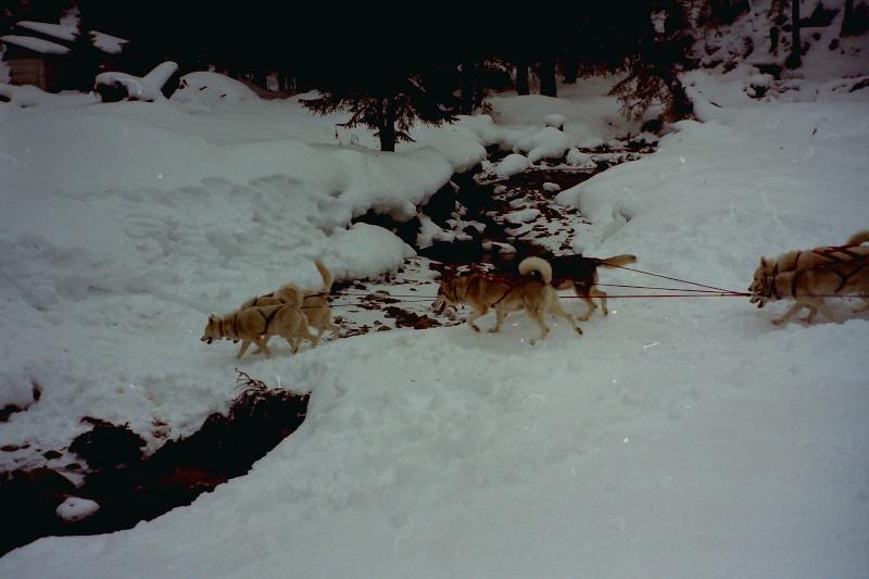 Mes plus beaux souvenirs de traineau à Chiens Pict0124