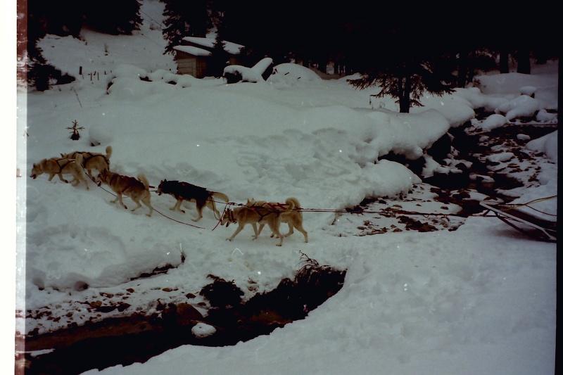 Mes plus beaux souvenirs de traineau à Chiens Pict0126