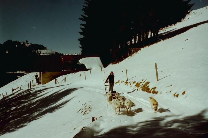 Mes plus beaux souvenirs de traineau à Chiens - Page 2 Pict0133