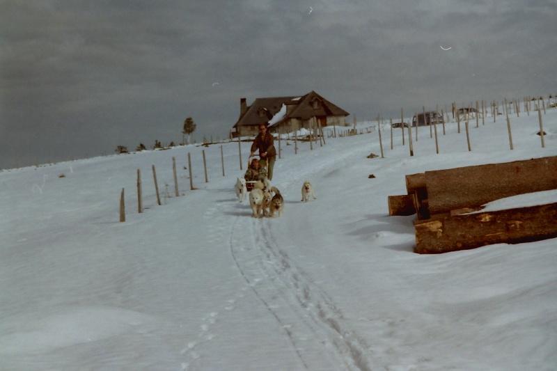 Mes plus beaux souvenirs de traineau à Chiens - Page 2 Pict0221