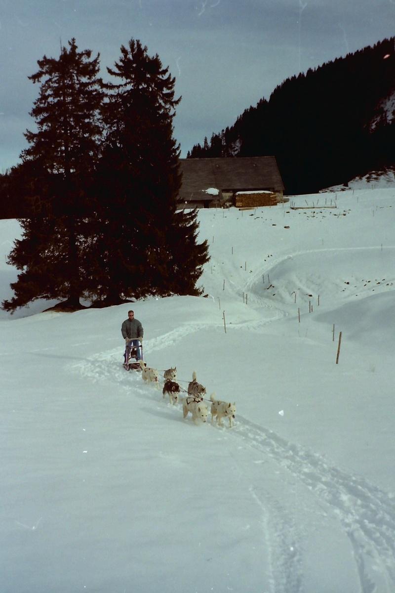 Mes plus beaux souvenirs de traineau à Chiens - Page 2 Pict0249
