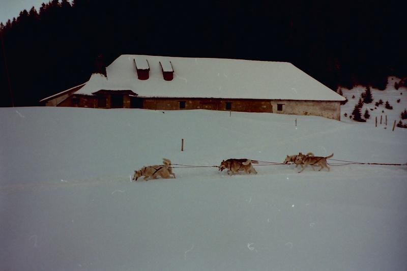 Mes plus beaux souvenirs de traineau à Chiens - Page 2 Pict0256