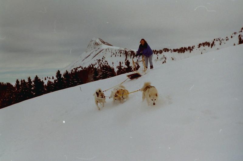 Mes plus beaux souvenirs de traineau à Chiens - Page 2 Pict0283