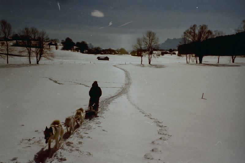 Mes plus beaux souvenirs de traineau à Chiens - Page 3 Pict0362