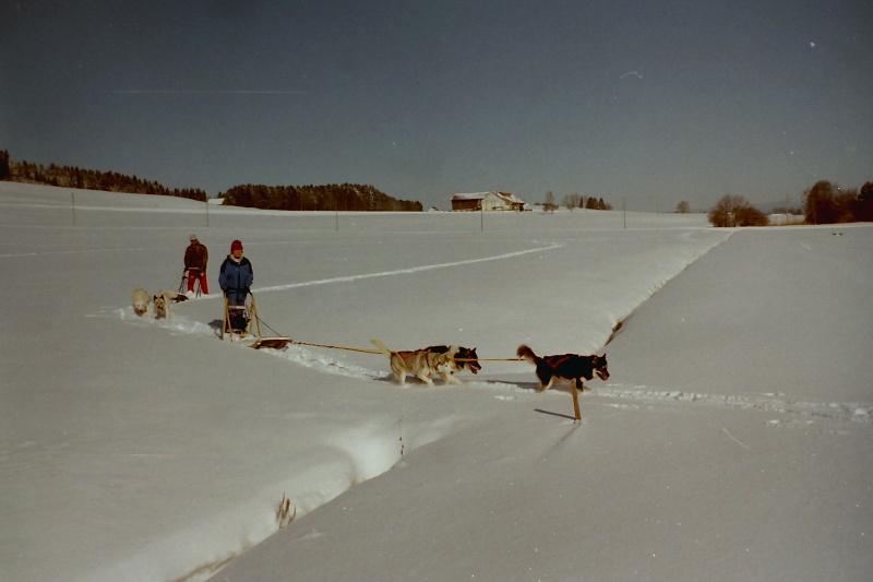 Mes plus beaux souvenirs de traineau à Chiens - Page 3 Pict0392