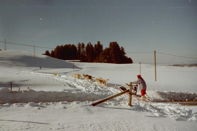 Mes plus beaux souvenirs de traineau à Chiens - Page 3 Pict0403