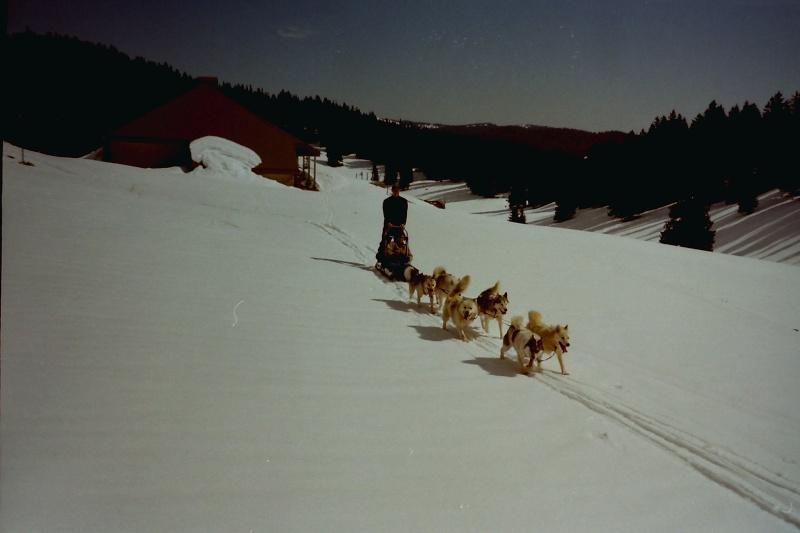 Mes plus beaux souvenirs de traineau à Chiens - Page 4 Pict0503