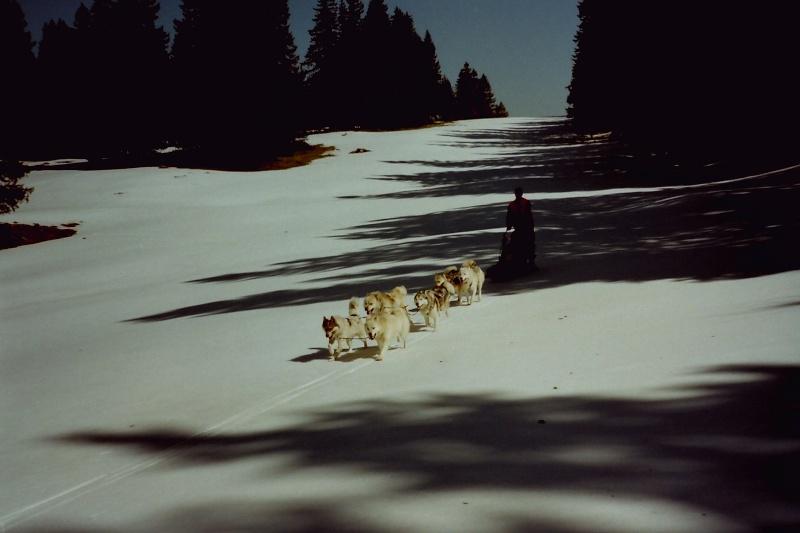 Mes plus beaux souvenirs de traineau à Chiens - Page 4 Pict0509