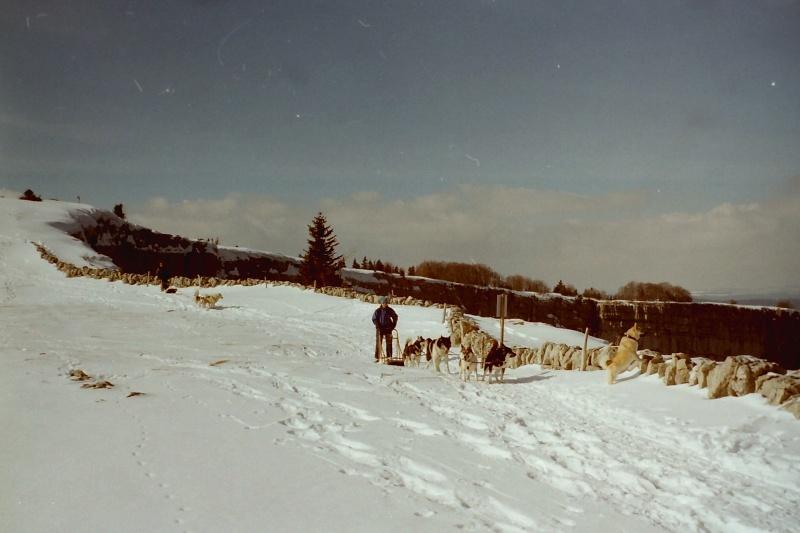 Mes plus beaux souvenirs de traineau à Chiens - Page 5 Pict0592