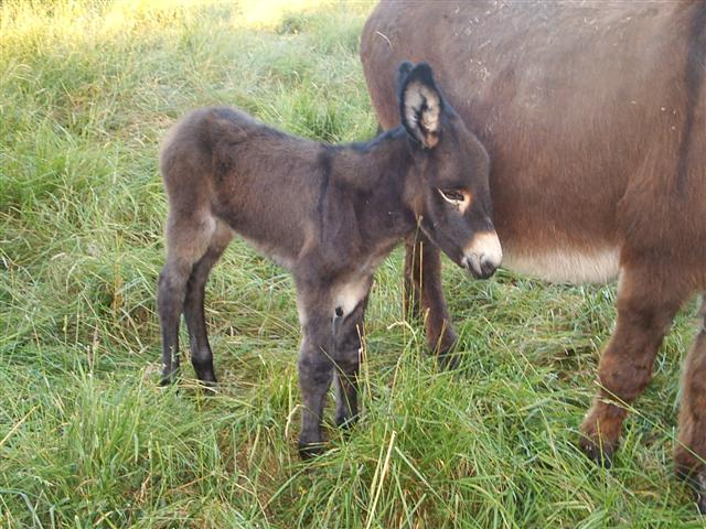 Un petit âne est né... S2010030
