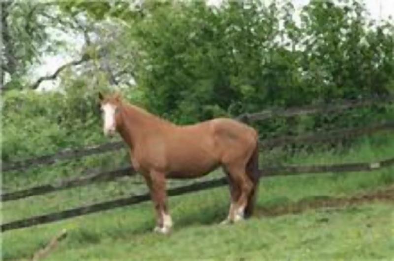 Recherche deux chevaux volé en Belgique! 47994410