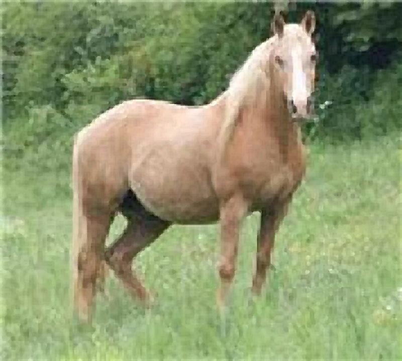 Recherche deux chevaux volé en Belgique! 65555010