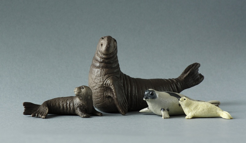 Wonderful gifts from Susanne! - Bullyland Sea elephants and Canary :D Elepha11