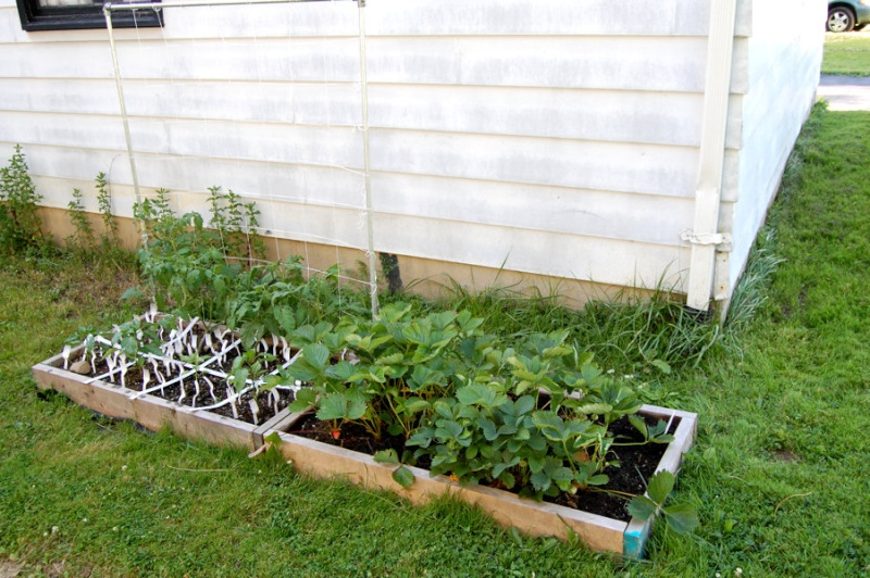 Cats in your garden? Dsc_7034