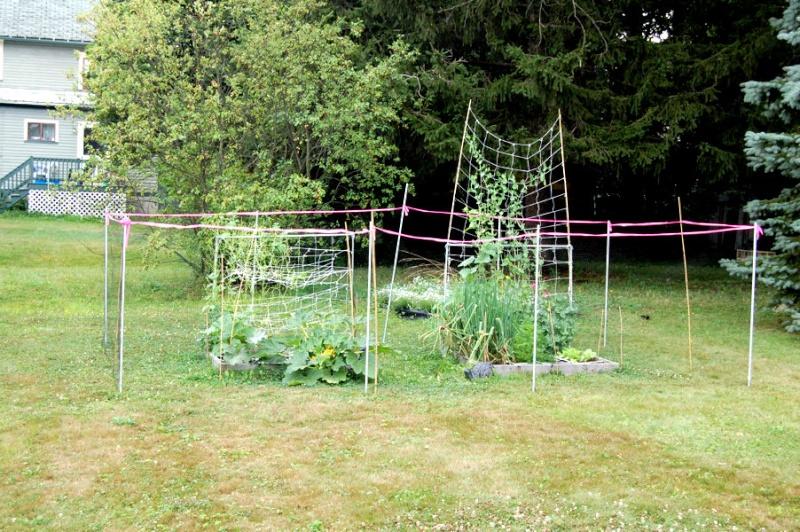Cats in your garden? Dsc_7035