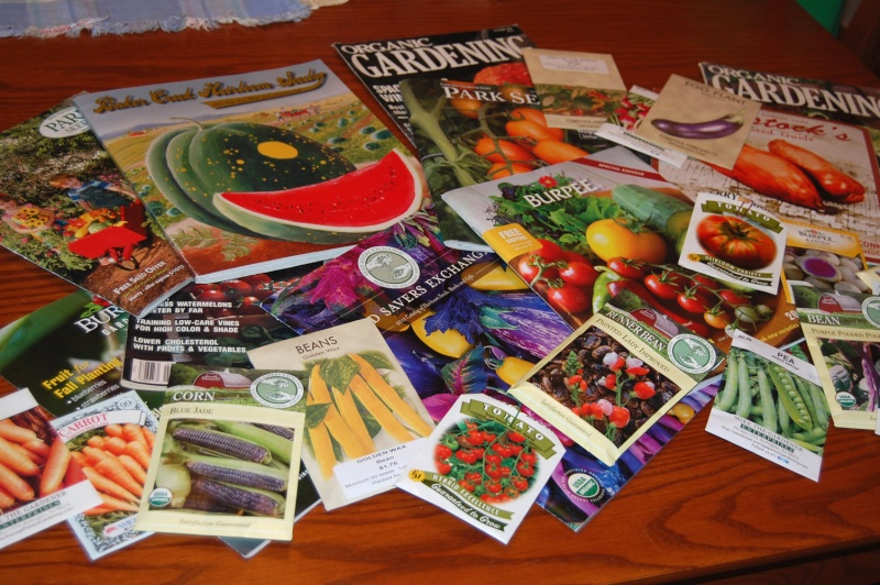 Photo of Seed Catalogs? Dsc_7510