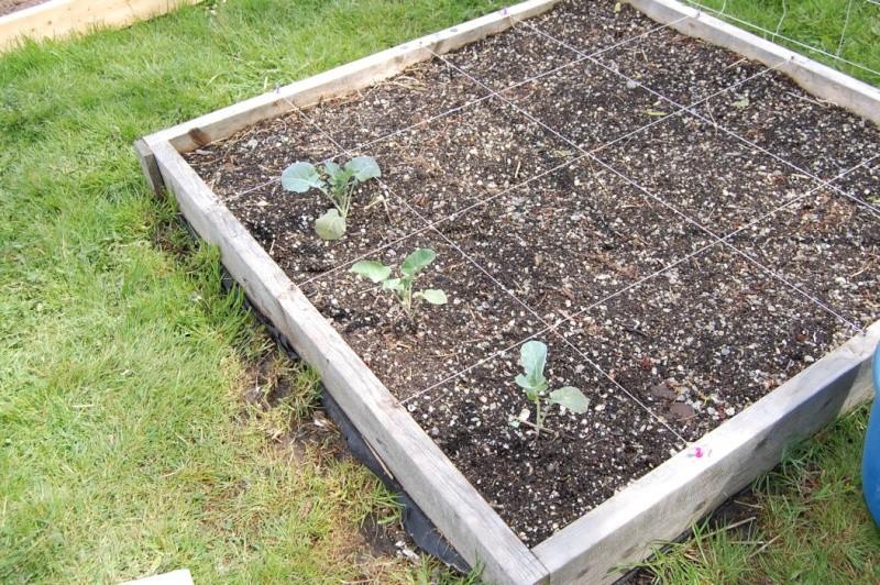 Garden progress 2012 Dsc_7814