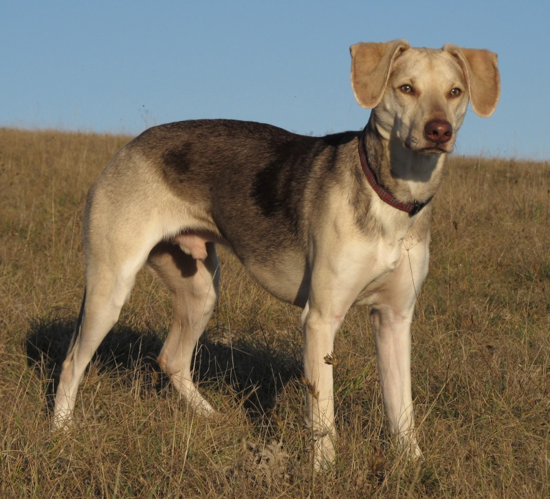 Les remarques faites sur vos chiens... et vos réparties! - Page 9 Img_2310