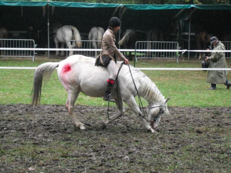 Ma démonstration au Festival du Cheval 2011 avec Texas 29460210