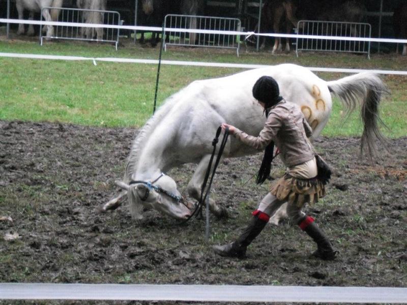 Ma démonstration au Festival du Cheval 2011 avec Texas 31617810