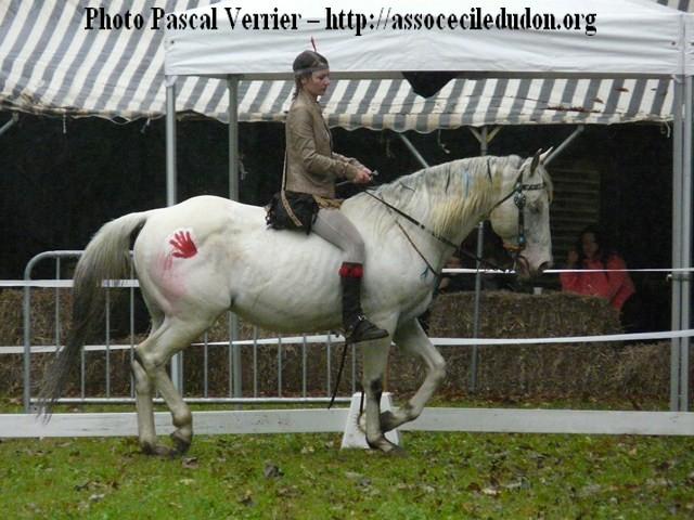 Ma démonstration au Festival du Cheval 2011 avec Texas P1060915