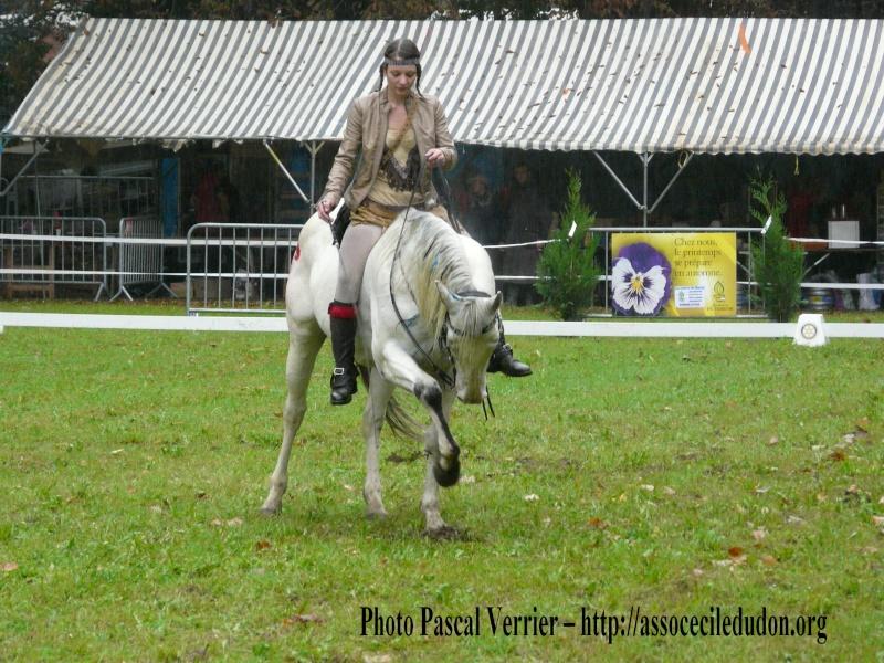 Ma démonstration au Festival du Cheval 2011 avec Texas P1060917