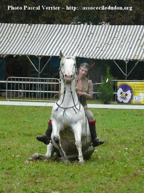 Ma démonstration au Festival du Cheval 2011 avec Texas P1060919