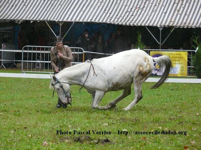 Ma démonstration au Festival du Cheval 2011 avec Texas P1060923