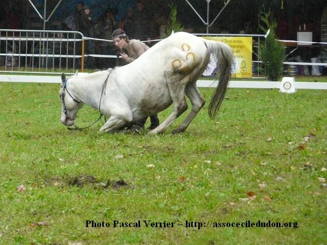 Ma démonstration au Festival du Cheval 2011 avec Texas P1060924