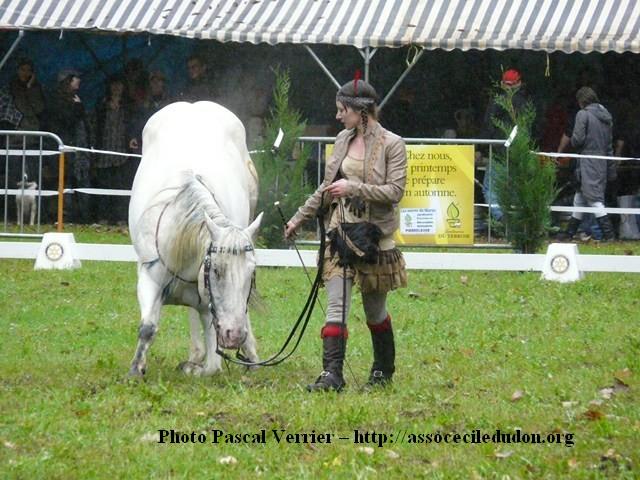 Ma démonstration au Festival du Cheval 2011 avec Texas P1060926