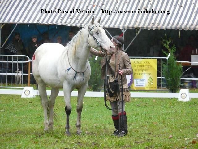 Ma démonstration au Festival du Cheval 2011 avec Texas P1060927