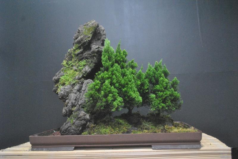 Alpine forest in the tropics Dsc_0088