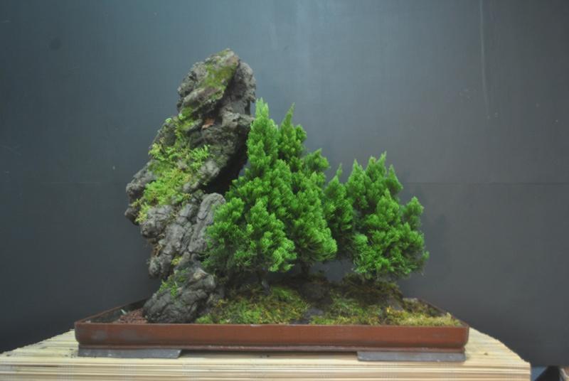 Alpine forest in the tropics Dsc_0089