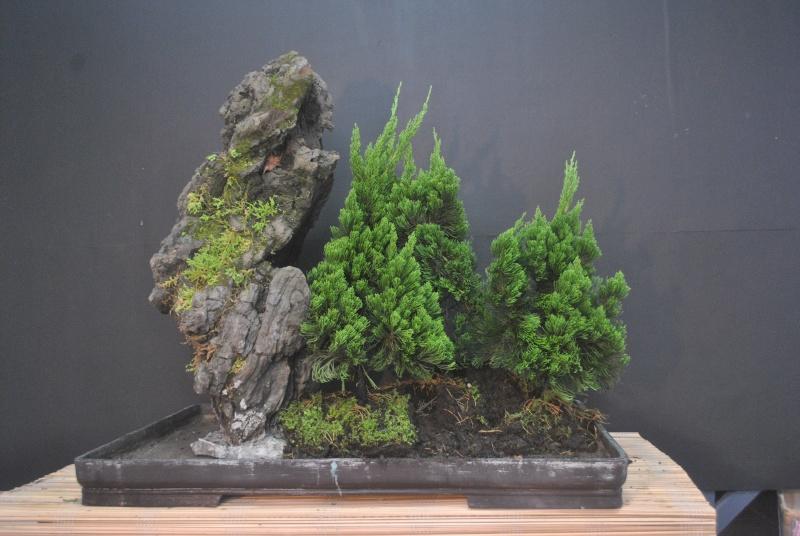 Alpine forest in the tropics Dsc_0094