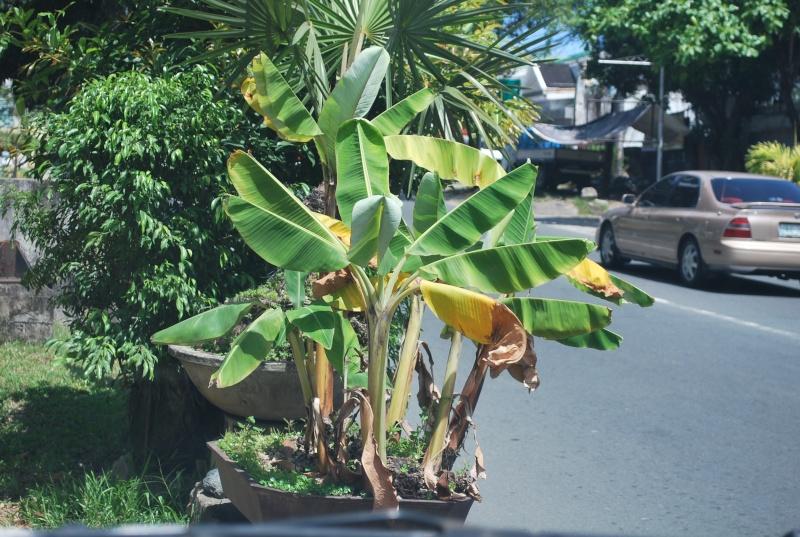 Succulent Bonsai Dsc_0361