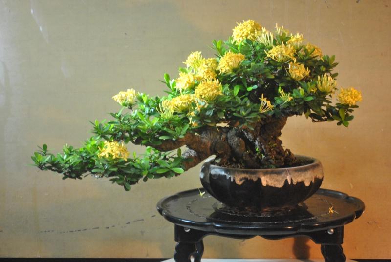 """Ixora chinensis -""""santan"""" Dsc_0842"""