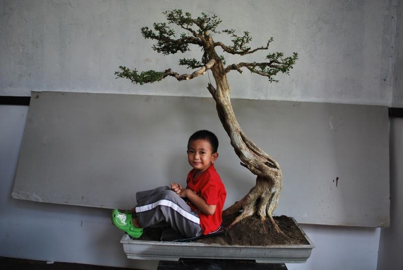 A peacefull tree... Dsc_1125