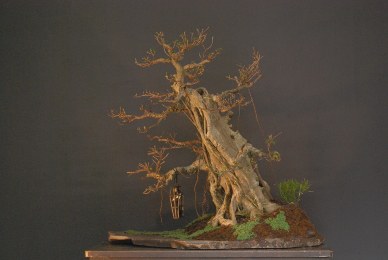 Halloween trees Dsc_1231