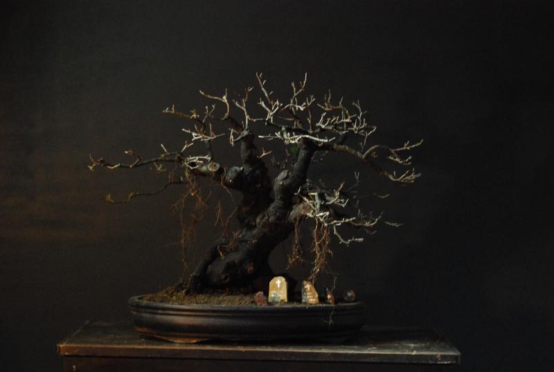 Halloween trees Dsc_1312