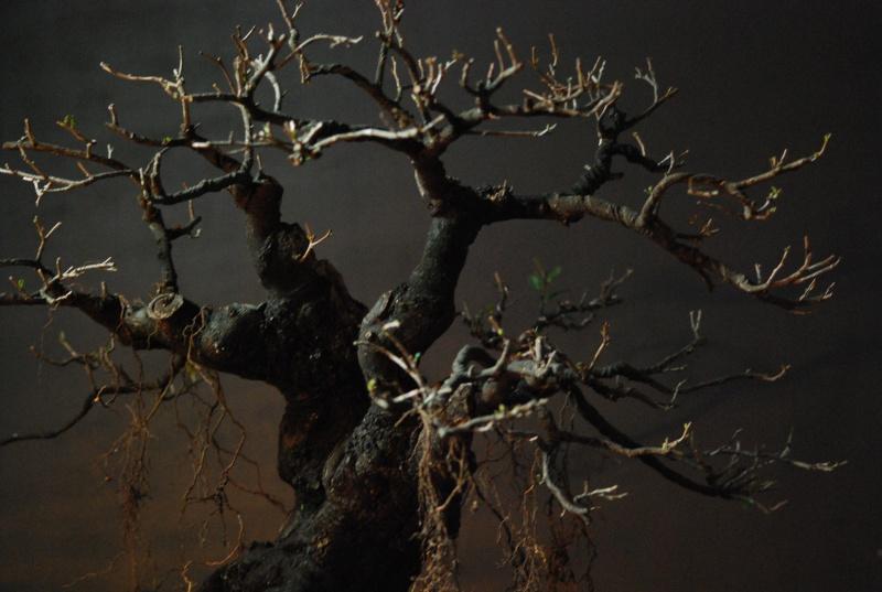 Halloween trees Dsc_1314