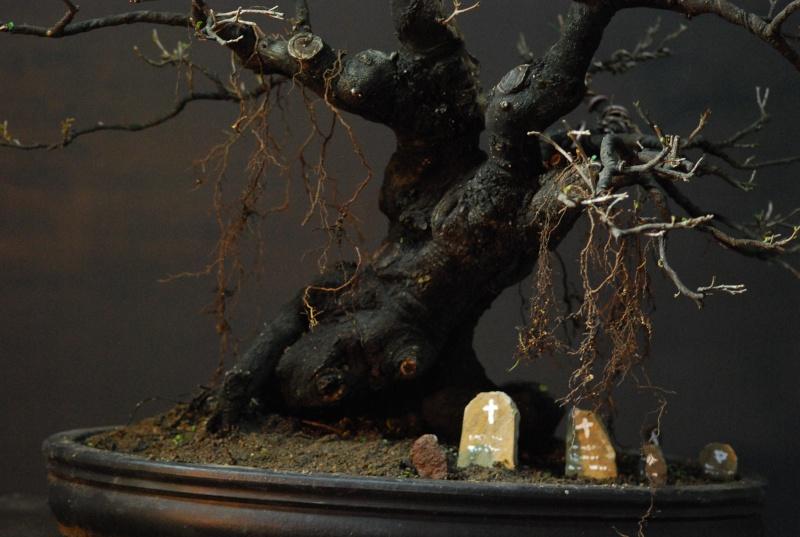 Halloween trees Dsc_1315