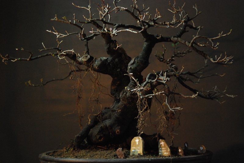 Halloween trees Dsc_1316