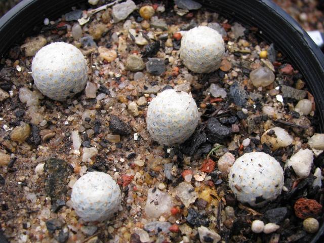some of my seedlings Seedli12