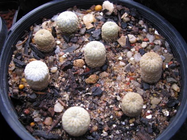 some of my seedlings Seedli13
